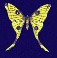 Yellow Butterfly On Blue by Isabella Howard