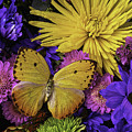 Yellow Butterfly On Bouquet by Garry Gay