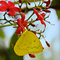 Yellow Butterfly by Wendy Fox