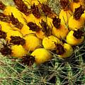 Yellow Cactus by Susanne Van Hulst