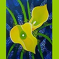 Yellow Callas by Helena Tiainen