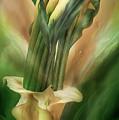 Yellow Callas In Calla Vase by Carol Cavalaris