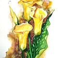 Yellow Callas by Karin  Dawn Kelshall- Best