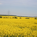 Yellow Canola Field by Christiane Schulze Art And Photography