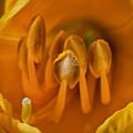Yellow by Clayton Brandenburg
