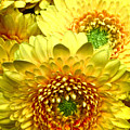 Yellow Cluster by Debra     Vatalaro