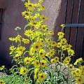 Yellow Composites At Ghost Ranch  by NaturesPix