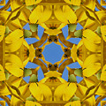 Yellow Coneflower Kaleidoscope by Smilin Eyes  Treasures