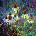 Yellow Coneflowers And Sage 1631 Idp_2 by Steven Ward