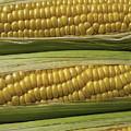 Yellow Corn by Garry Gay