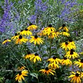 Yellow Daisies And Purple Sage by Norma Boeckler