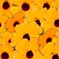 Yellow Daisy Flowers by Smilin Eyes  Treasures