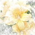 Yellow Daylily by Michele A Loftus