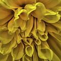 Yellow Dinner Plate Dahlia by Dale Kauzlaric