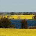 Yellow by Douglas Barnard