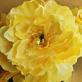 Yellow Elagance by Marsha Heiken