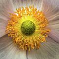Yellow Eye by Sergej Juganov