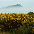 Yellow Field And The Fog by Michael Thomas