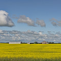 Yellow Fields And Blue Clouds by David Arment
