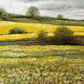 Yellow Fields by Susan Jenkins