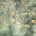 Yellow Finch by Mary McCullah