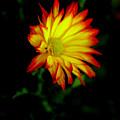 Yellow Fire by Mark Platt