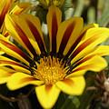 Yellow Flower by Bastian Brisch
