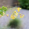 Yellow Flower by Daniel Seok