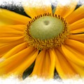 Yellow Flower by Donna Bentley