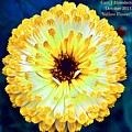 Yellow Flower H A by Gert J Rheeders
