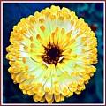 Yellow Flower H B With Decorative Ornate Printed Frame by Gert J Rheeders