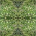 Yellow Flower Mandala 2 by Julia Woodman