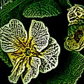 Yellow Flower Woodcut by David Lane
