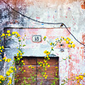 Yellow Flowers And Decayed Wall by Silvia Ganora