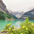 Yellow Flowers At Lake Louise by Daniela Constantinescu