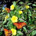 Yellow Flowers Butterflies Digital Painting Gulf Coast Florida by G Linsenmayer
