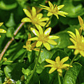 Yellow Flowers On A Green Carpet by Bill Cannon