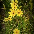 Yellow Flowers by Robert Meyerson