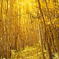 Yellow Forest Trail by Mike Norton