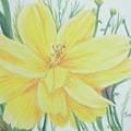 Yellow Garden Flower by Hilda and Jose Garrancho