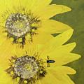 Yellow Gazanias And Bee  by Deborah Christensen
