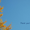 Yellow Ginkgothank You Greeting Card by Eena Bo