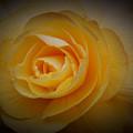 Yellow Glow by Sheila McDowell