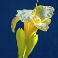 Yellow Glue Blue #f9 by Leif Sohlman