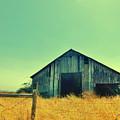 Yellow Grass by Marilyn Diaz