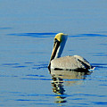 Yellow Headed Pelican by Michael Thomas