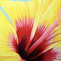 Yellow Hibiscus by Adam Johnson