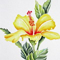 Yellow Hibiscus by Deborah Ronglien