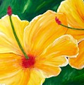 Yellow Hibiscus  by Laura R OKelly