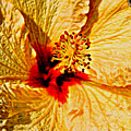 Yellow Hibiscus by Mariola Bitner